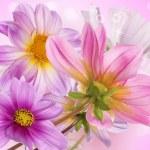 Beautiful flowers card — Stock Photo