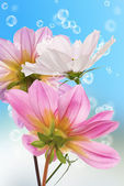 Beautiful flowers card.Floral background — Stock Photo