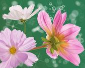 Flower beautiful decorative card — Stock fotografie