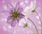 Flower beautiful decorative card — Stock Photo