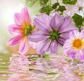 Naturaleza flores fondo hermoso — Foto de Stock