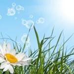 Spring — Stock Photo #14456303
