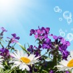 Spring — Stock Photo #14456309