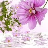 Flores exóticas. fondo de flora — Foto de Stock