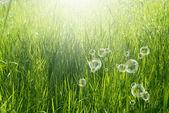 Jarní příroda background.green tráva — Stock fotografie