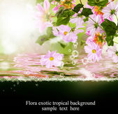 Exotic tropical flora.Flora card — Stock Photo