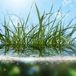 Beautiful green grass.Flora background — Stock Photo