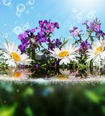 красивые цветы карты.цветочный фон — Стоковое фото