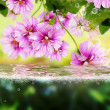 Flora exotic  background — Stockfoto