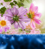 Pozadí exotické flóry — Stock fotografie