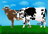 Dairy cows — Stockfoto