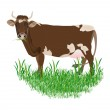 Dairy cow over white background.Vector illustration — Stock Vector