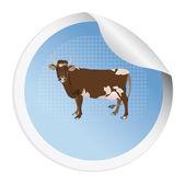 Sticker met een koe — Stockfoto