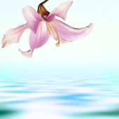 Flower exotic pink lily on a water dawn background — Stock Photo