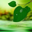 Green leaf tree with drop water on a summer nature background — Stock Photo #17625919