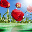 Red tulips.Spring background — Stock Photo