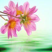 Exotic tropical flower on a water background — Stock Photo