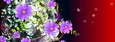 Abstrait coloré floral — Photo