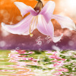 Tropical sundown and exotic water beautiful orchid - Stock Photo