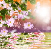 Exotic tropical sundown and water beautiful flower — Stock Photo