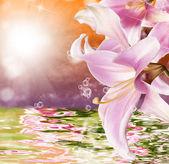 エキゾチックな熱帯の夕日と美しい水を花します。 — ストック写真