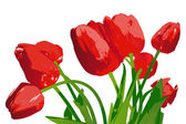 Bouquet red garden tulip on a white background — Stock Photo