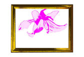 Vintage foto frame wooden and pink lily — Stock Photo