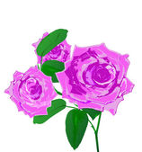 Beautiful pink rose on a white background.Holiday card.Vector — Stockvektor