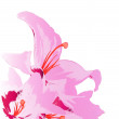 Beautiful pink lily on a white background.Holiday card.Vector — 图库矢量图片