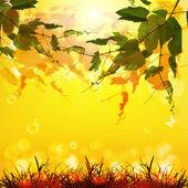 Doğa sezon arka plan — Stok fotoğraf