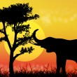 Stock Photo: Elephant in savanna. Africa.National park.
