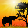 Elephant in savanna. Africa.National park. — Stockfoto