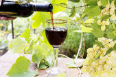 Bottle young wine and ripe grape.Wine background — Stock Photo