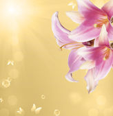 Summer beautiful flower.Nature season — Stock Photo