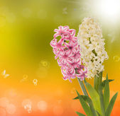 Spring exotic beautiful flower on a abstract nature background — Stock Photo