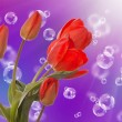 Stock Photo: Spring beautiful tulip flower.Flower holiday card