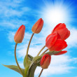 Spring beautiful tulip flower.Flower holiday card — Stock Photo #24886583