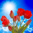 Spring beautiful tulip flower.Nature season — Stock Photo #24886807