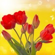 Spring  beautiful tulip flower.Nature season — Zdjęcie stockowe