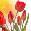 Spring beautiful tulip flower.Nature season — Stock Photo