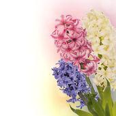 Beautiful spring exotic flower.Celebration card — Stock Photo