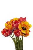 Primavera flor hermosa tulipán — Foto de Stock