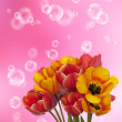 Spring beautiful tulip flower on a abstract background — Stock Photo