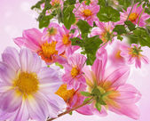 Pink spring flowers — Stock Photo