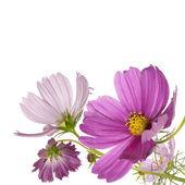 Kwiaty piękne obramowanie — Zdjęcie stockowe