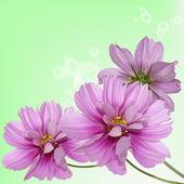 Beautiful flower background — Stock Photo