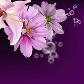 Beautiful flower card background — Stock Photo