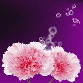 Flor fondo hermoso card.rose — Foto de Stock