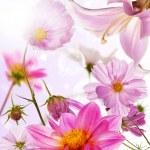 Beautiful flower card — Stock Photo #28571119