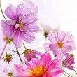 Beautiful flower card — Stockfoto